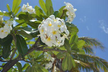 最後の楽園、タヒチの素晴らしさを伝えたい①〜ボラボラ島までの道〜