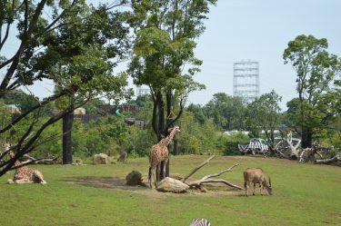 よこはま動物園ズーラシアは北門から入場すると良い