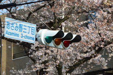 あざみ野、すすき野界隈で桜が見れる有名な場所はドコ!?